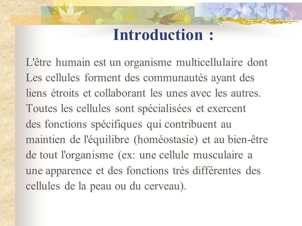 Introduction : L'être humain est un organisme multicellulaire dont Les cellules forment des communautés ayant des liens étroits et collaborant les une