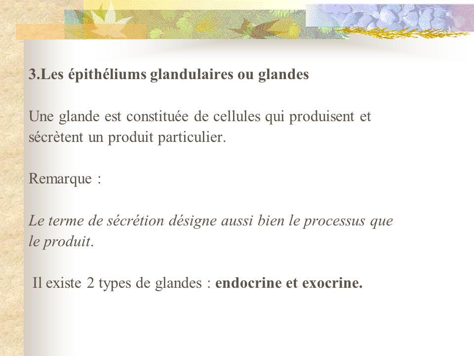 3.Les épithéliums glandulaires ou glandes Une glande est constituée de cellules qui produisent et sécrètent un produit particulier. Remarque : Le term