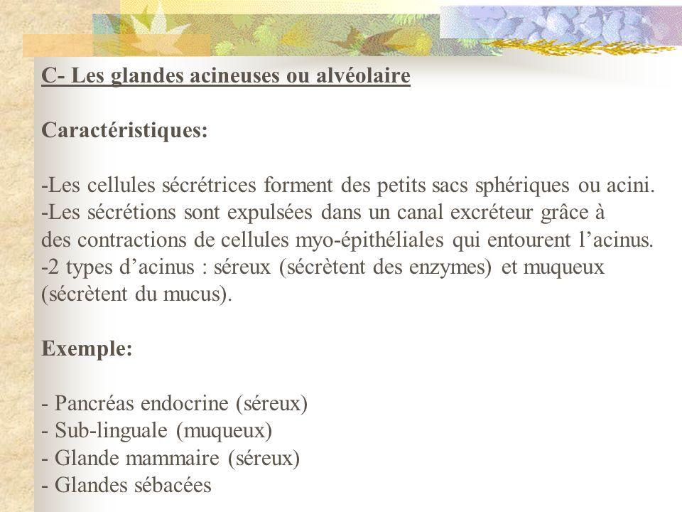 C- Les glandes acineuses ou alvéolaire Caractéristiques: -Les cellules sécrétrices forment des petits sacs sphériques ou acini. -Les sécrétions sont e