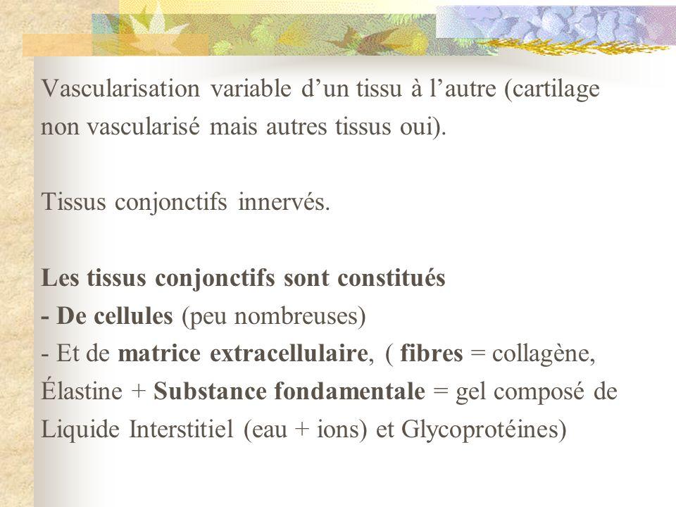 Vascularisation variable dun tissu à lautre (cartilage non vascularisé mais autres tissus oui). Tissus conjonctifs innervés. Les tissus conjonctifs so