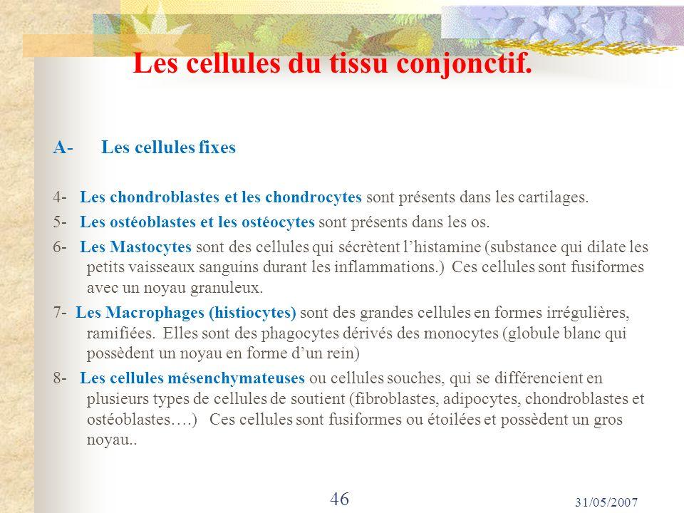 Les cellules du tissu conjonctif. A- Les cellules fixes 4- Les chondroblastes et les chondrocytes sont présents dans les cartilages. 5- Les ostéoblast