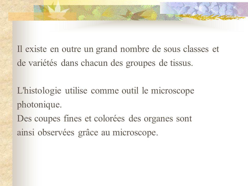 Il existe en outre un grand nombre de sous classes et de variétés dans chacun des groupes de tissus. L'histologie utilise comme outil le microscope ph