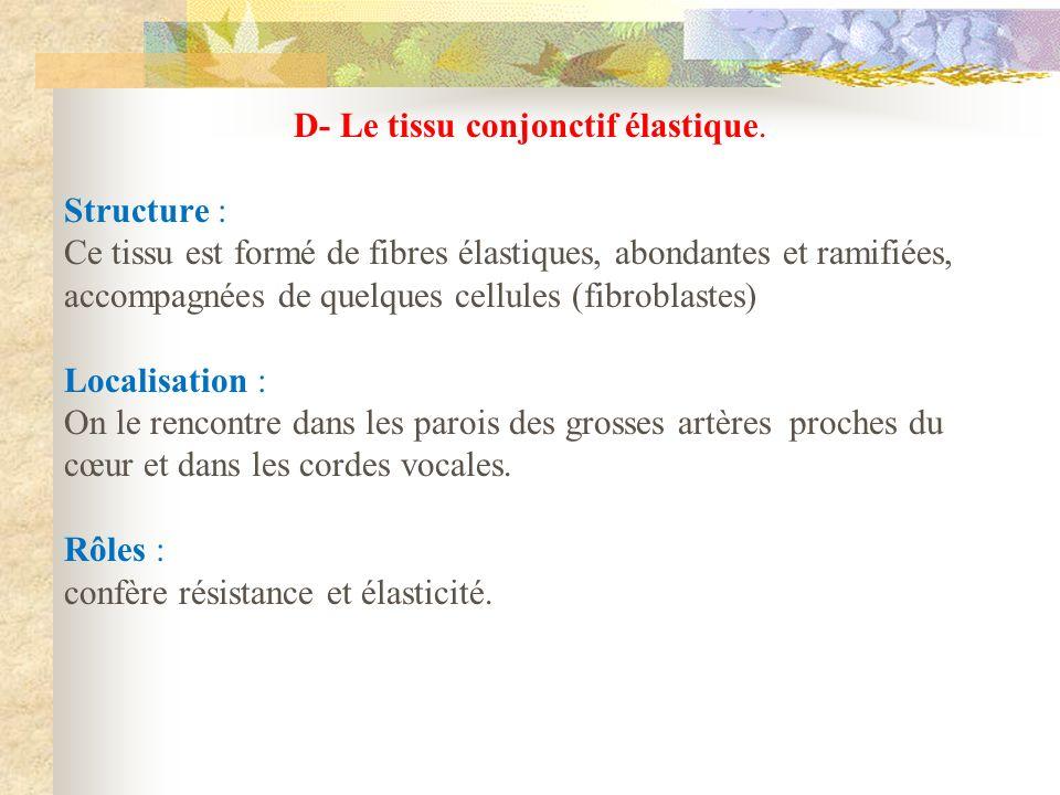 D- Le tissu conjonctif élastique. Structure : Ce tissu est formé de fibres élastiques, abondantes et ramifiées, accompagnées de quelques cellules (fib