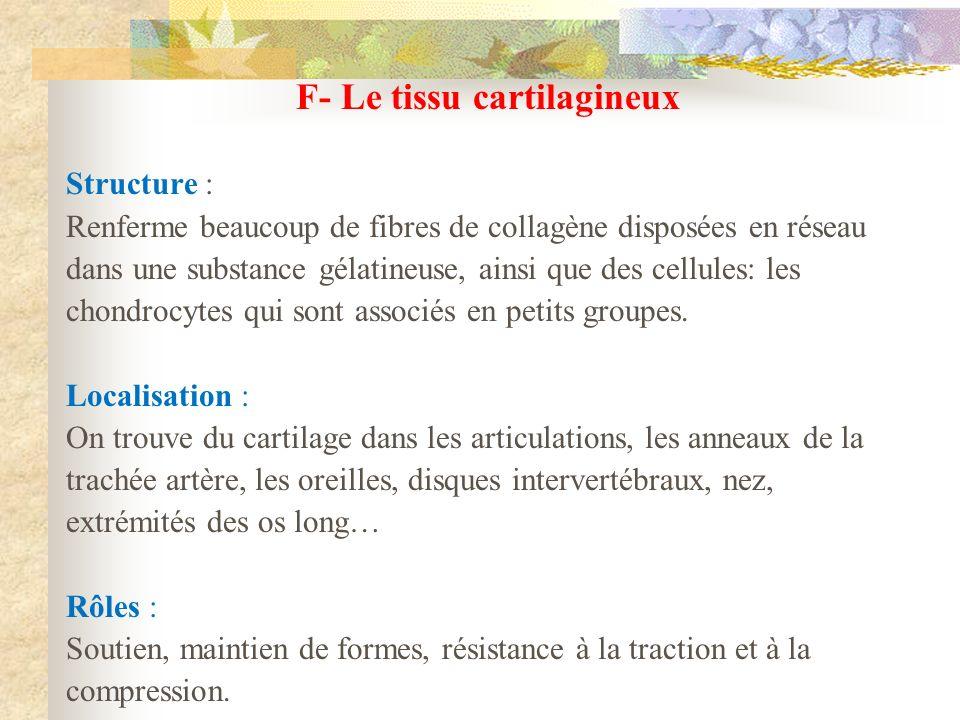 F- Le tissu cartilagineux Structure : Renferme beaucoup de fibres de collagène disposées en réseau dans une substance gélatineuse, ainsi que des cellu