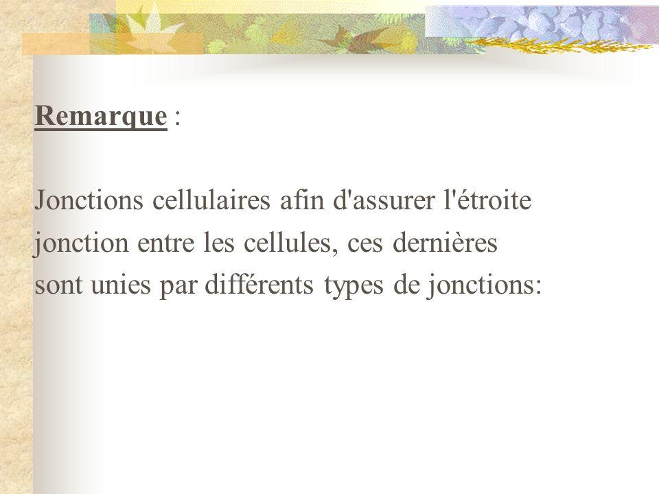 Remarque : Jonctions cellulaires afin d'assurer l'étroite jonction entre les cellules, ces dernières sont unies par différents types de jonctions: