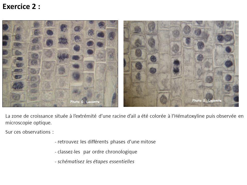Sur ces observations : - retrouvez les différents phases dune mitose - classez-les par ordre chronologique - schématisez les étapes essentielles La zo