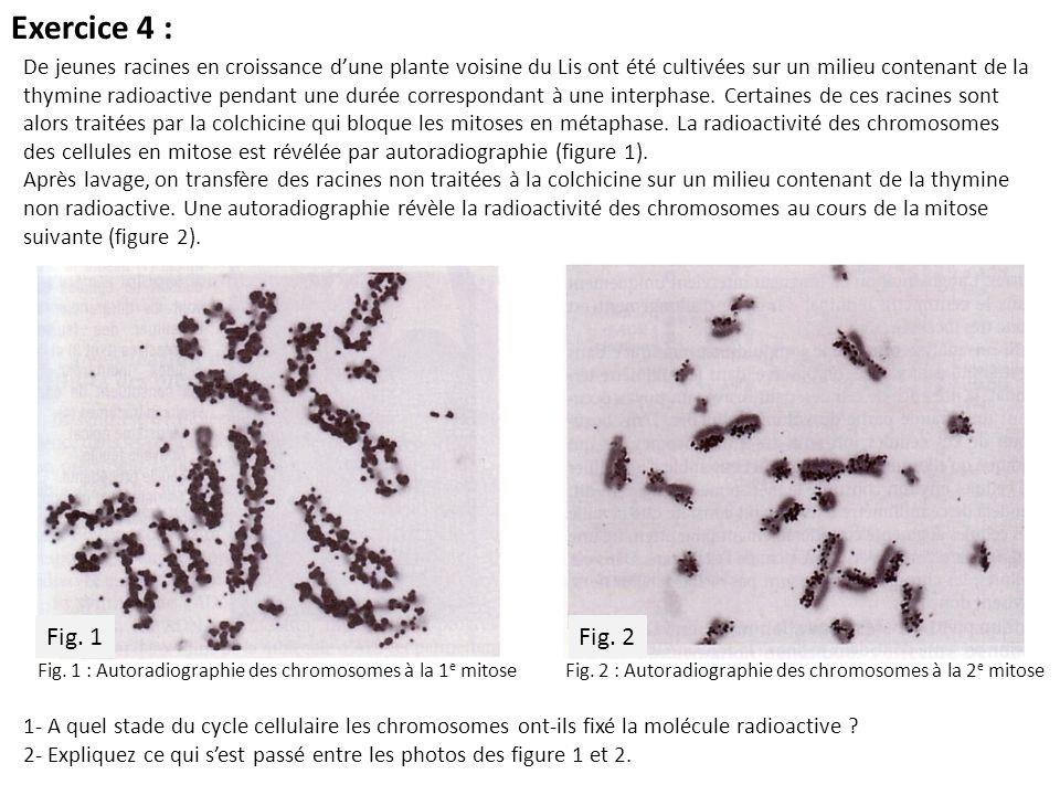 Exercice 4 : 1- A quel stade du cycle cellulaire les chromosomes ont-ils fixé la molécule radioactive ? 2- Expliquez ce qui sest passé entre les photo