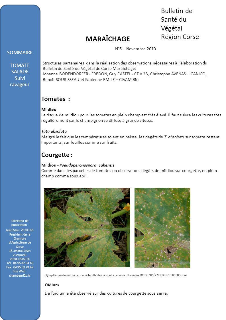 Bulletin de Santé du Végétal Région Corse MARAÎCHAGE N°6 – Novembre 2010 Structures partenaires dans la réalisation des observations nécessaires à lél