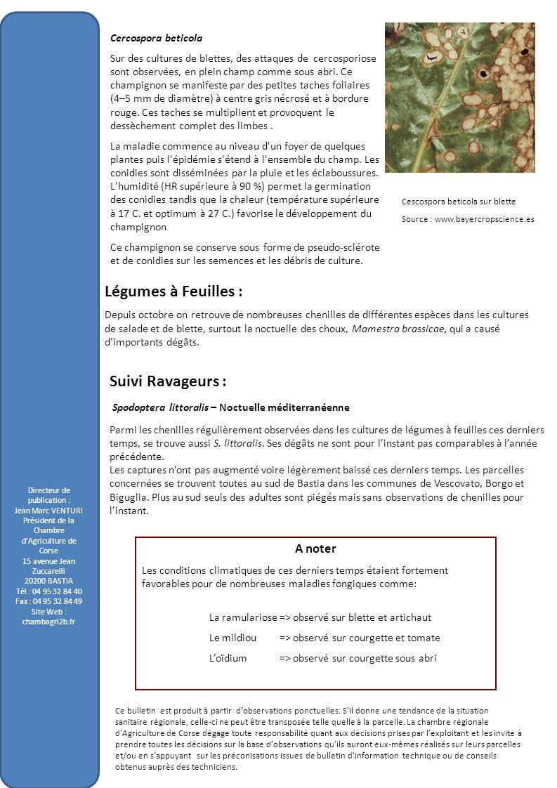 Directeur de publication : Jean Marc VENTURI Président de la Chambre dAgriculture de Corse 15 avenue Jean Zuccarelli 20200 BASTIA Tél : 04 95 32 84 40