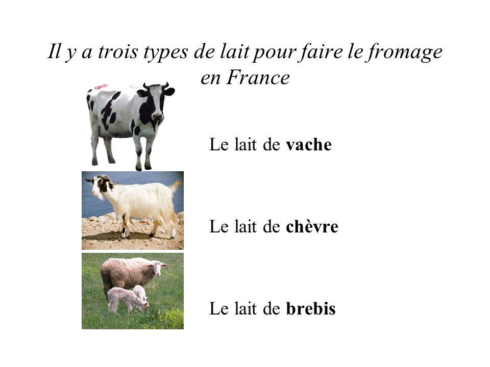 Il y a trois types de lait pour faire le fromage en France Le lait de vache Le lait de chèvre Le lait de brebis