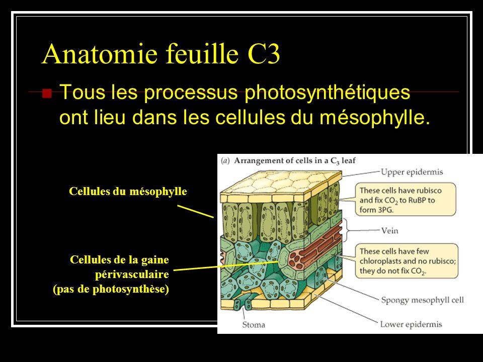 Les plantes en C3 La majorité des plantes sont dites en C3, parce que le 1 er produit intermédiaire stable formé par la fixation du carbone est le 3-