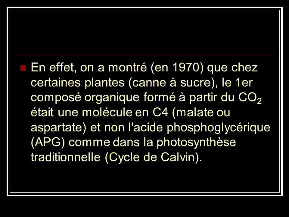 Elles font précéder le cycle de Calvin de réactions qui forment des composés à quatre atomes de carbone avec le CO2. Ces plantes sont appelées Plantes