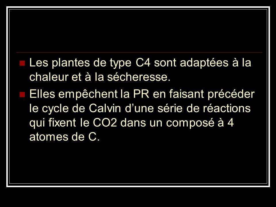 La PEPcase est très affine pour le CO 2 et l'incorporation peut donc se réaliser avec une faible concentration en CO 2, lorsqu'il fait chaud et que le