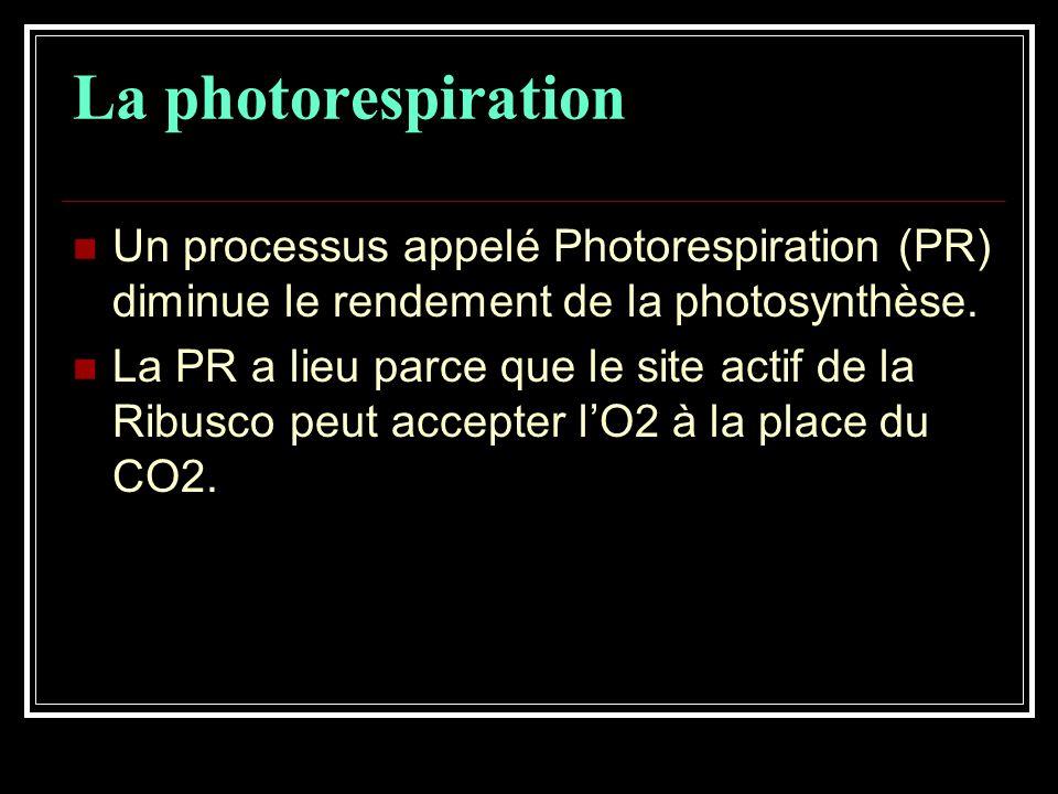 Un processus appelé Photorespiration (PR) diminue le rendement de la photosynthèse.