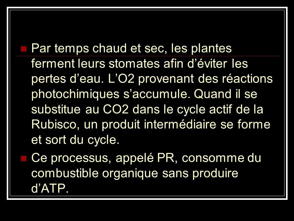 Contrairement à la respiration cellulaire, la PR nengendre pas dATP. Elle réduit le rendement de la photosynthèse en soutirant de la matière organique