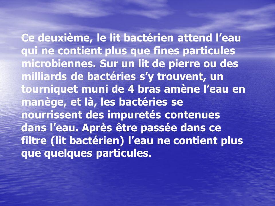 Ce deuxième, le lit bactérien attend leau qui ne contient plus que fines particules microbiennes. Sur un lit de pierre ou des milliards de bactéries s