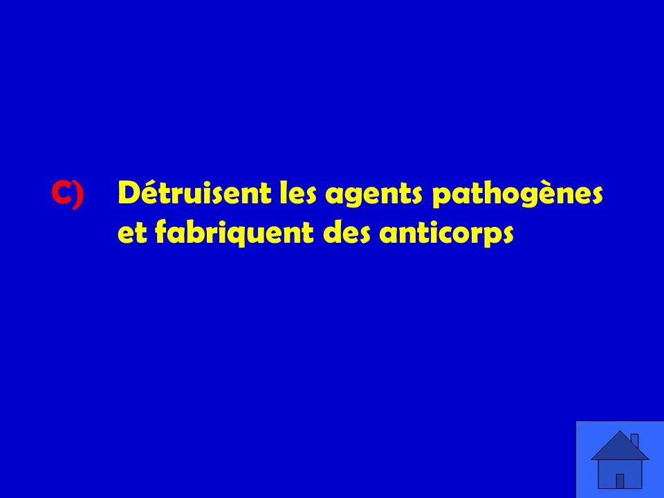 C) Détruisent les agents pathogènes et fabriquent des anticorps
