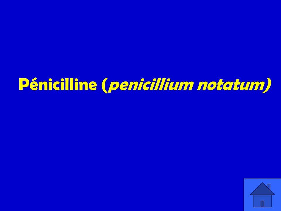 Pénicilline (penicillium notatum)