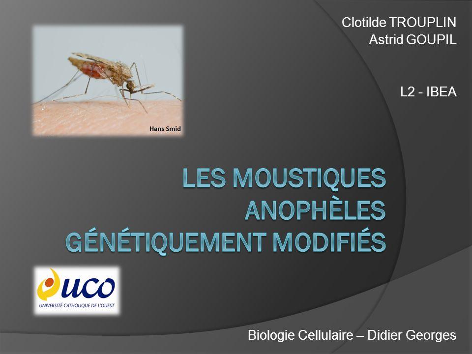 Clotilde TROUPLIN Astrid GOUPIL L2 - IBEA Biologie Cellulaire – Didier Georges