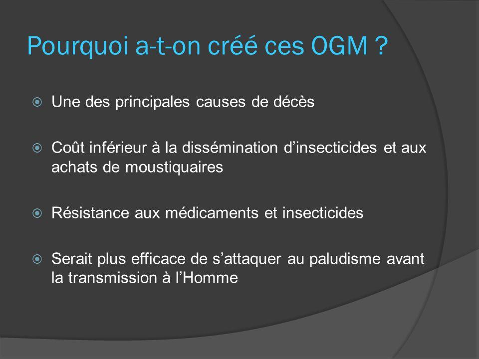 Pourquoi a-t-on créé ces OGM ? Une des principales causes de décès Coût inférieur à la dissémination dinsecticides et aux achats de moustiquaires Rési