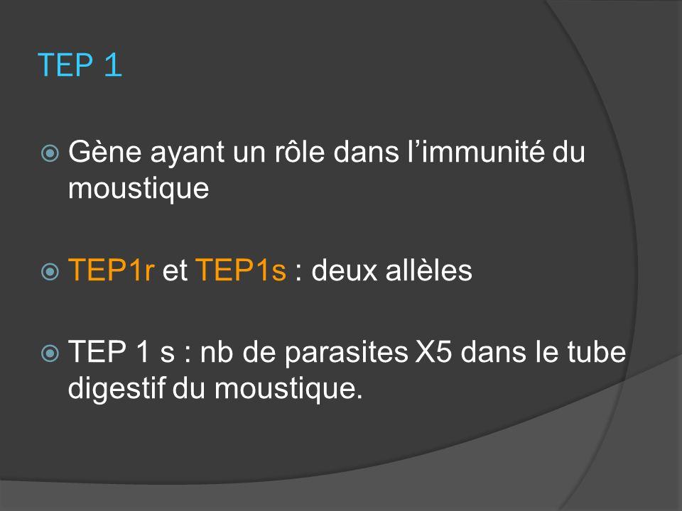 TEP 1 Gène ayant un rôle dans limmunité du moustique TEP1r et TEP1s : deux allèles TEP 1 s : nb de parasites X5 dans le tube digestif du moustique.
