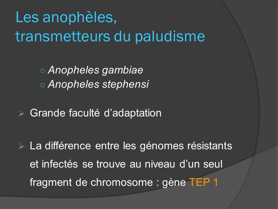 Les anophèles, transmetteurs du paludisme Anopheles gambiae Anopheles stephensi Grande faculté dadaptation La différence entre les génomes résistants