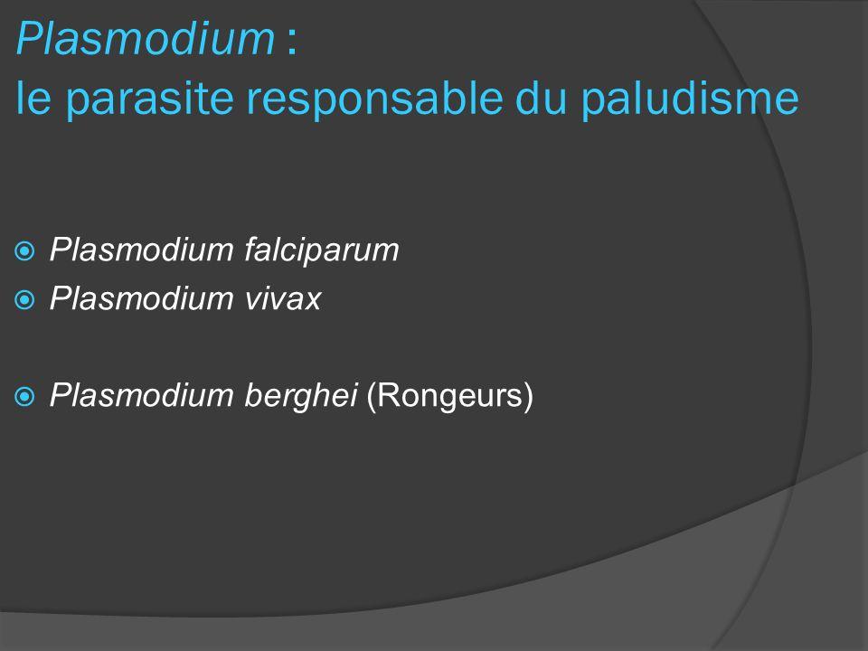 Plasmodium : le parasite responsable du paludisme Plasmodium falciparum Plasmodium vivax Plasmodium berghei (Rongeurs)