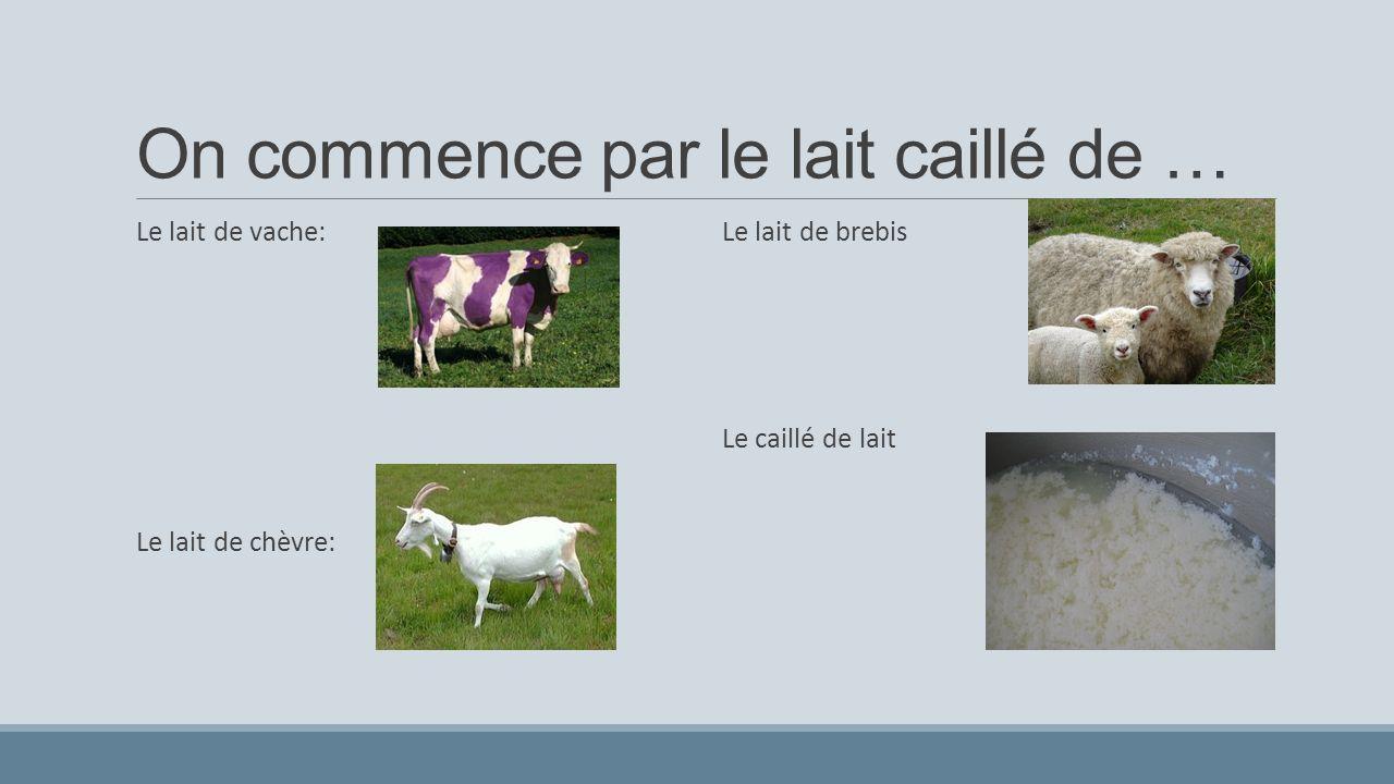 On commence par le lait caillé de … Le lait de vache: Le lait de chèvre: Le lait de brebis: 2. le caille de lait Le lait de brebis Le caillé de lait