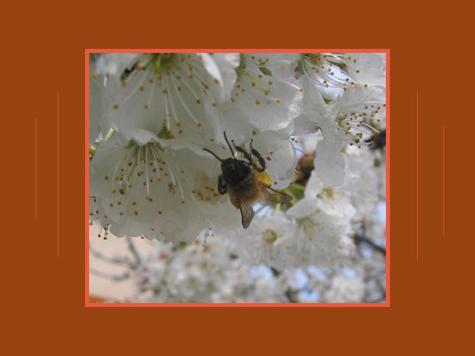 Ici cest le sanglot dune chute qui gronde Et dont leau réfléchit un bleu fragment du ciel; Plus loin, sur une fleur que la rosée inonde, Une abeille bourdonne en senivrant de miel.
