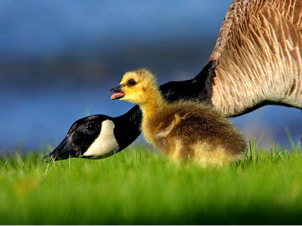Non Maman !! Cest de lintelligence affective!