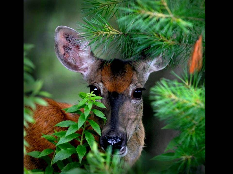 Les animaux doivent souvent faire preuve dingéniosité et donc dintelligence!!