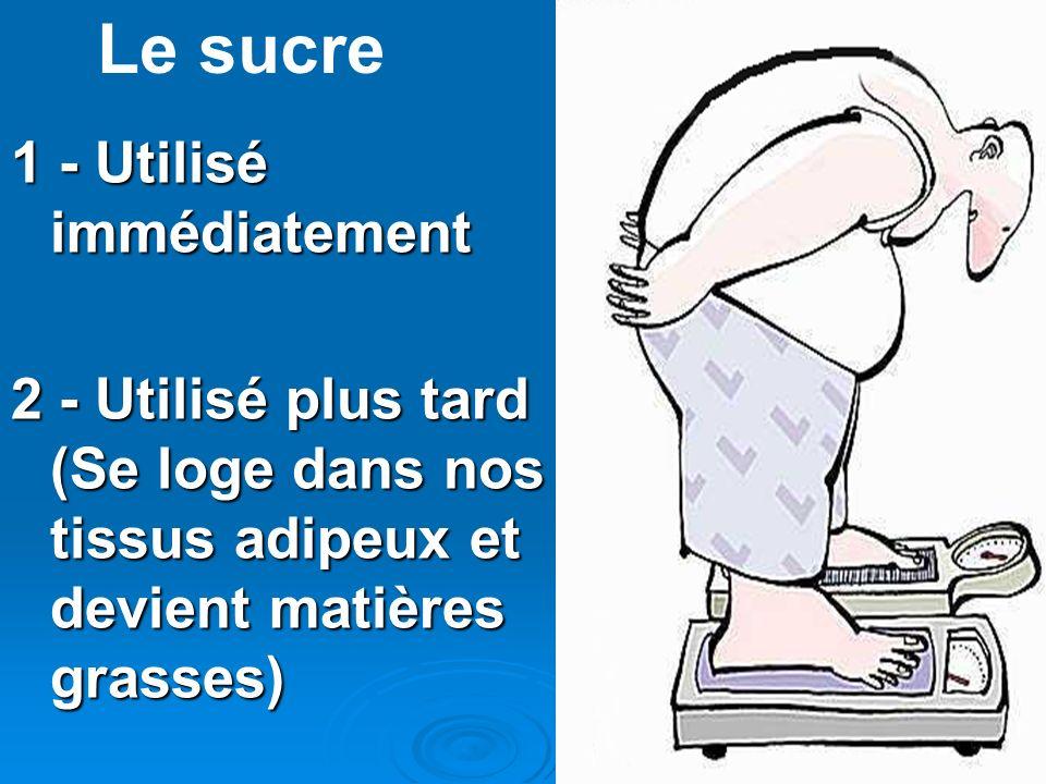 1 - Utilisé immédiatement 2 - Utilisé plus tard (Se loge dans nos tissus adipeux et devient matières grasses) Le sucre