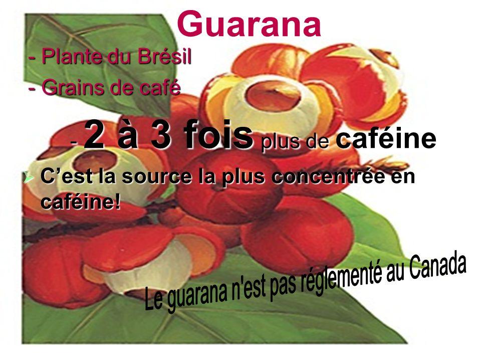 Guarana - Plante du Brésil - Plante du Brésil - Grains de café - Grains de café - 2 à 3 fois plus de caféine Cest la source la plus concentrée en café