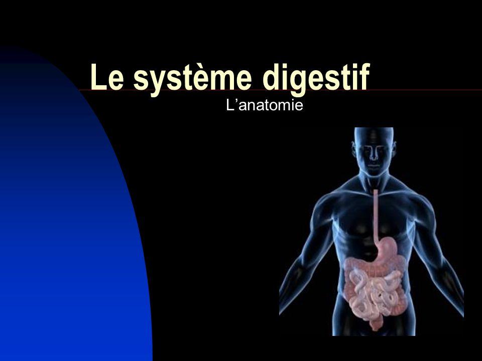 Le système digestif Lanatomie