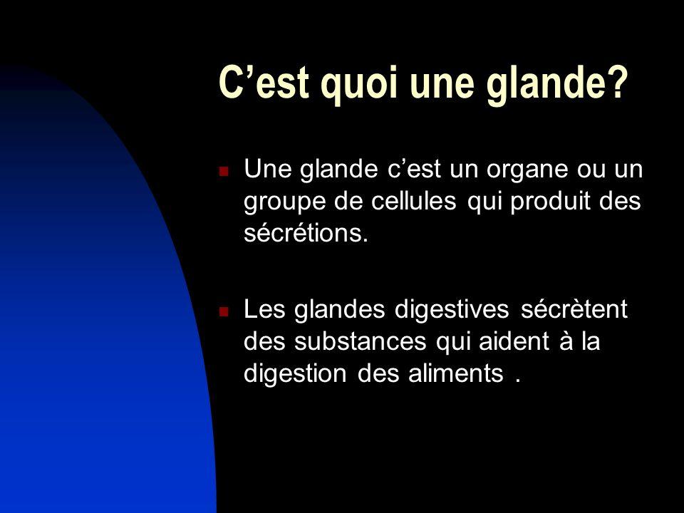 Cest quoi une glande? Une glande cest un organe ou un groupe de cellules qui produit des sécrétions. Les glandes digestives sécrètent des substances q
