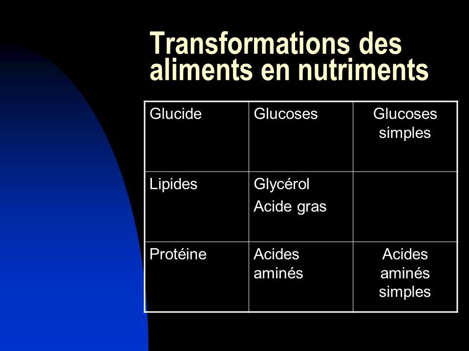 Transformations des aliments en nutriments GlucideGlucosesGlucoses simples LipidesGlycérol Acide gras ProtéineAcides aminés Acides aminés simples