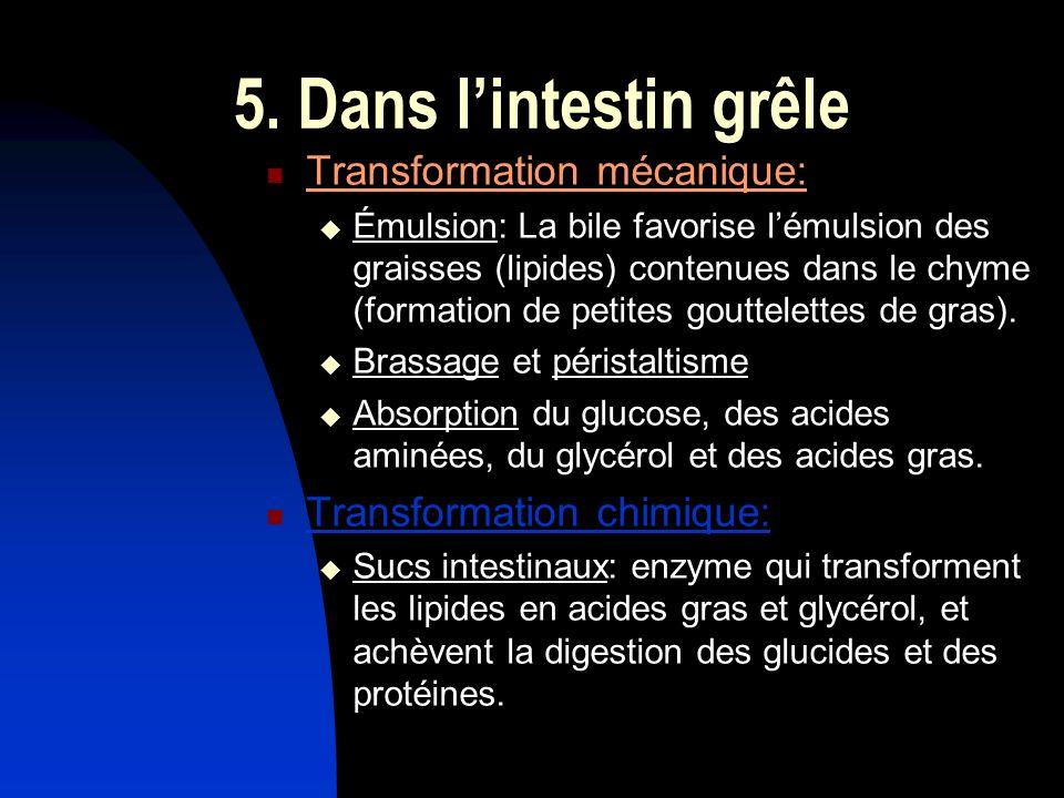 5. Dans lintestin grêle Transformation mécanique: Émulsion: La bile favorise lémulsion des graisses (lipides) contenues dans le chyme (formation de pe