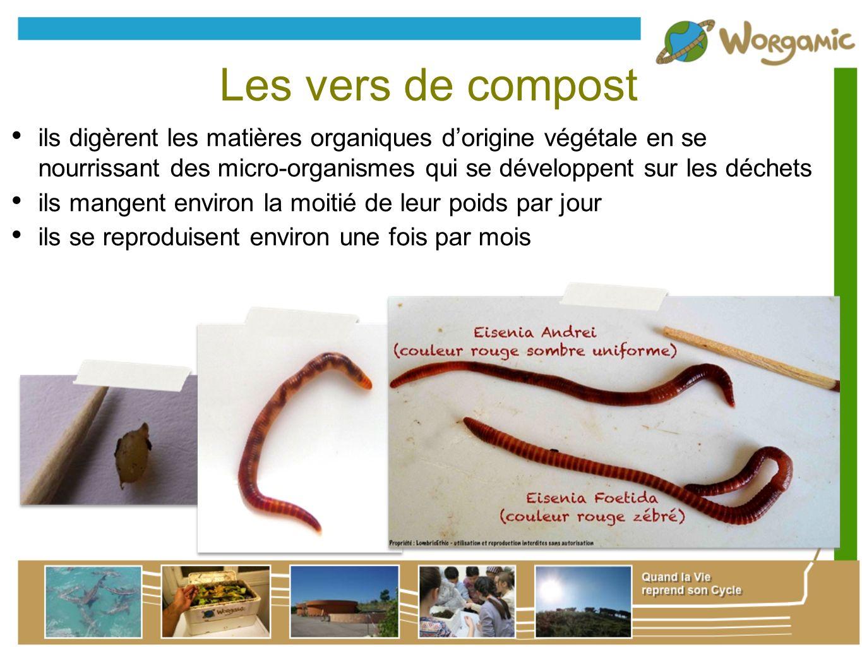 Les vers de compost ils digèrent les matières organiques dorigine végétale en se nourrissant des micro-organismes qui se développent sur les déchets i