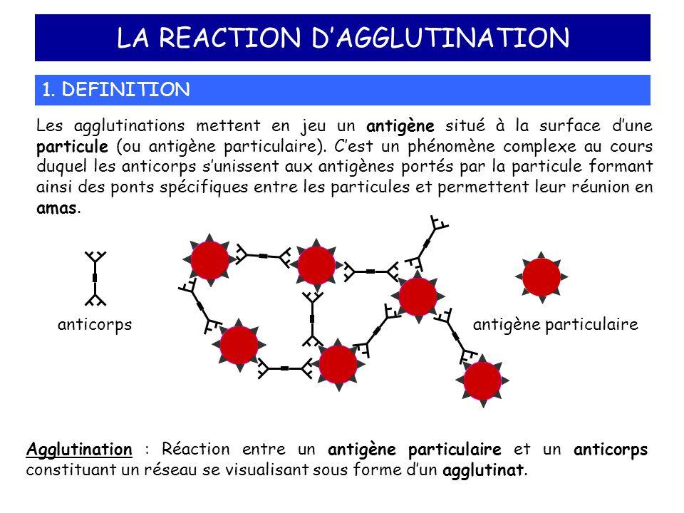 LA REACTION DAGGLUTINATION 1. DEFINITION Les agglutinations mettent en jeu un antigène situé à la surface dune particule (ou antigène particulaire). C