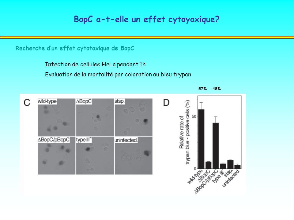 Recherche dun effet cytotoxique de BopC Infection de cellules HeLa pendant 1h Evaluation de la mortalité par coloration au bleu trypan 57%48% BopC a-t