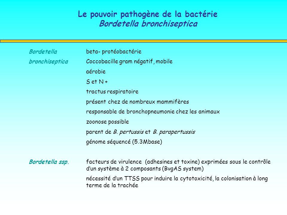 Le pouvoir pathogène de la bactérie Bordetella bronchiseptica Bordetella beta- protéobactérie bronchiseptica Coccobacille gram négatif, mobile aérobie