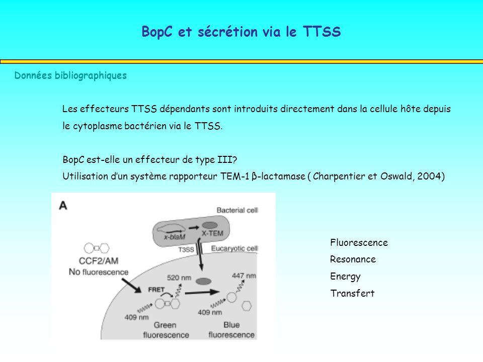 BopC et sécrétion via le TTSS Données bibliographiques Les effecteurs TTSS dépendants sont introduits directement dans la cellule hôte depuis le cytop