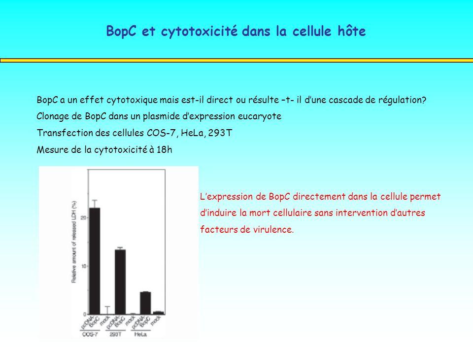 BopC et cytotoxicité dans la cellule hôte BopC a un effet cytotoxique mais est-il direct ou résulte –t- il dune cascade de régulation? Clonage de BopC