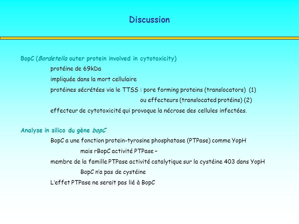 Discussion BopC (Bordetella outer protein involved in cytotoxicity) protéine de 69kDa impliquée dans la mort cellulaire protéines sécrétées via le TTS