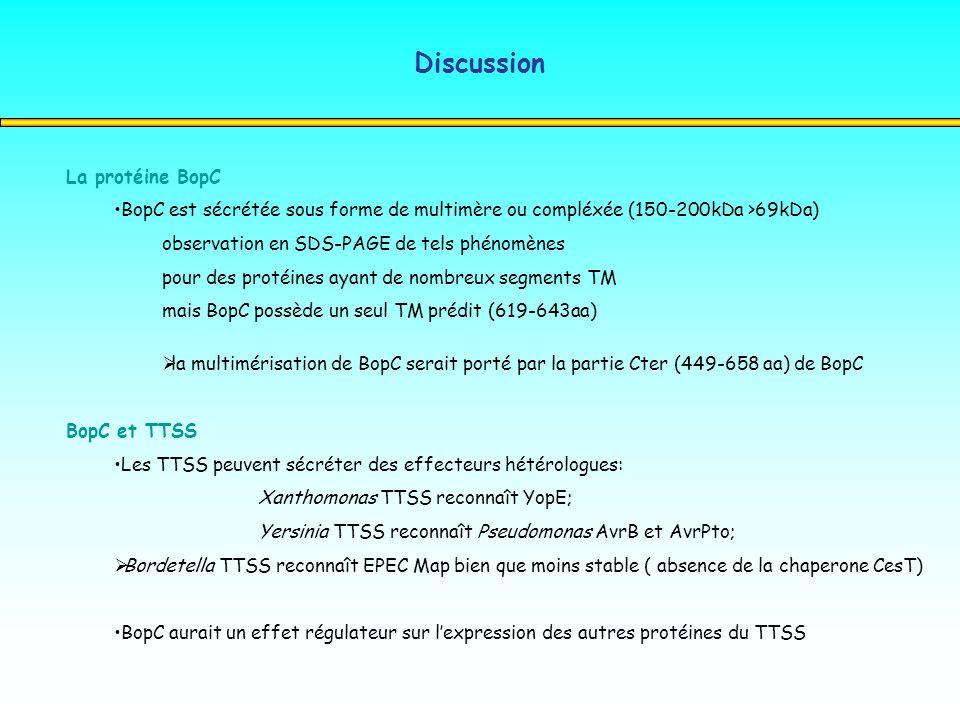 Discussion La protéine BopC BopC est sécrétée sous forme de multimère ou compléxée (150-200kDa >69kDa) observation en SDS-PAGE de tels phénomènes pour