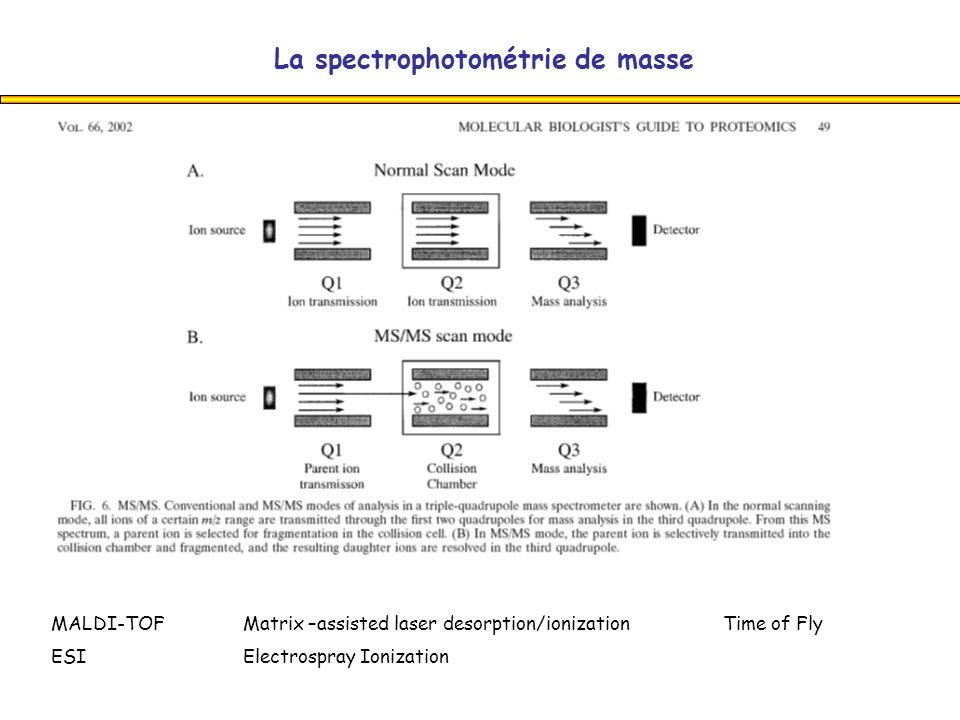 La spectrophotométrie de masse MALDI-TOFMatrix –assisted laser desorption/ionization Time of Fly ESI Electrospray Ionization