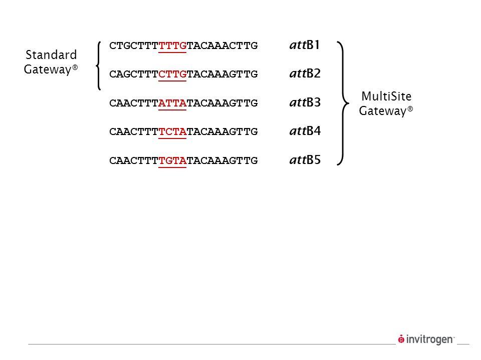 CTGCTTTTTTGTACAAACTTG attB1 CAGCTTTCTTGTACAAAGTTG attB2 CAACTTTATTATACAAAGTTG attB3 CAACTTTTCTATACAAAGTTG attB4 CAACTTTTGTATACAAAGTTG attB5 Standard G
