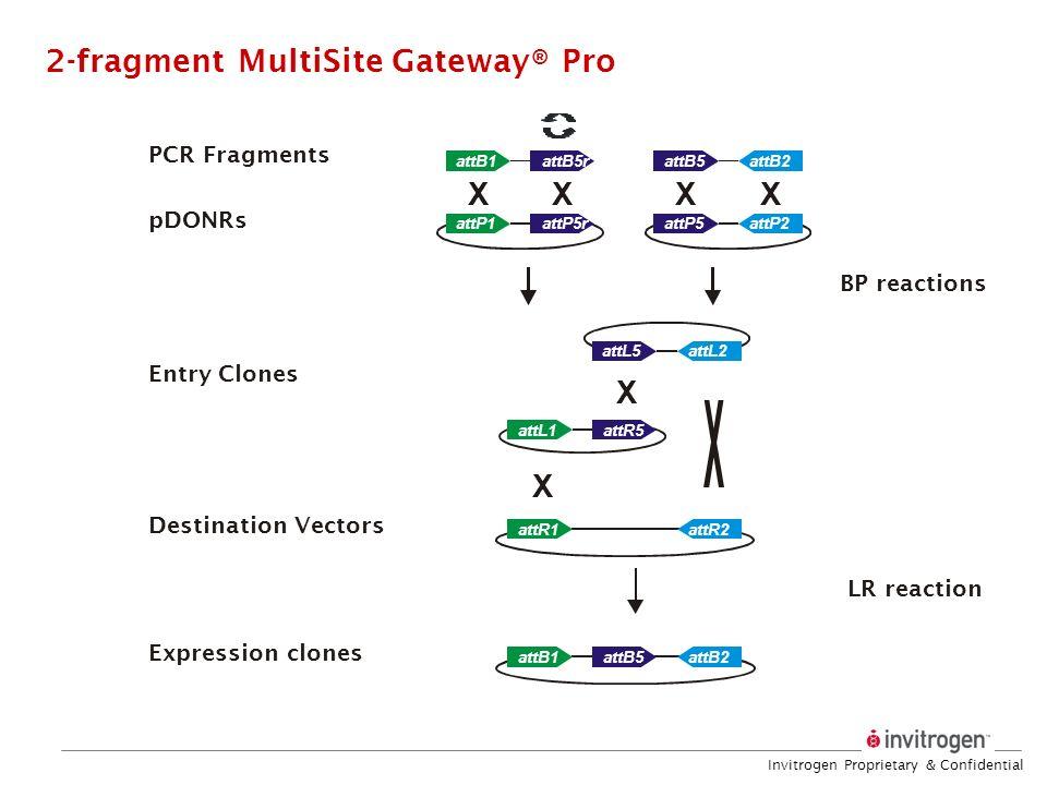 Invitrogen Proprietary & Confidential XXXX X X attB2attB5 attP2attP5 attR2attR1 attB5rattB1 attP5rattP1 attL5 attL1 attB2attB5attB1 attL2 attR5 PCR Fr