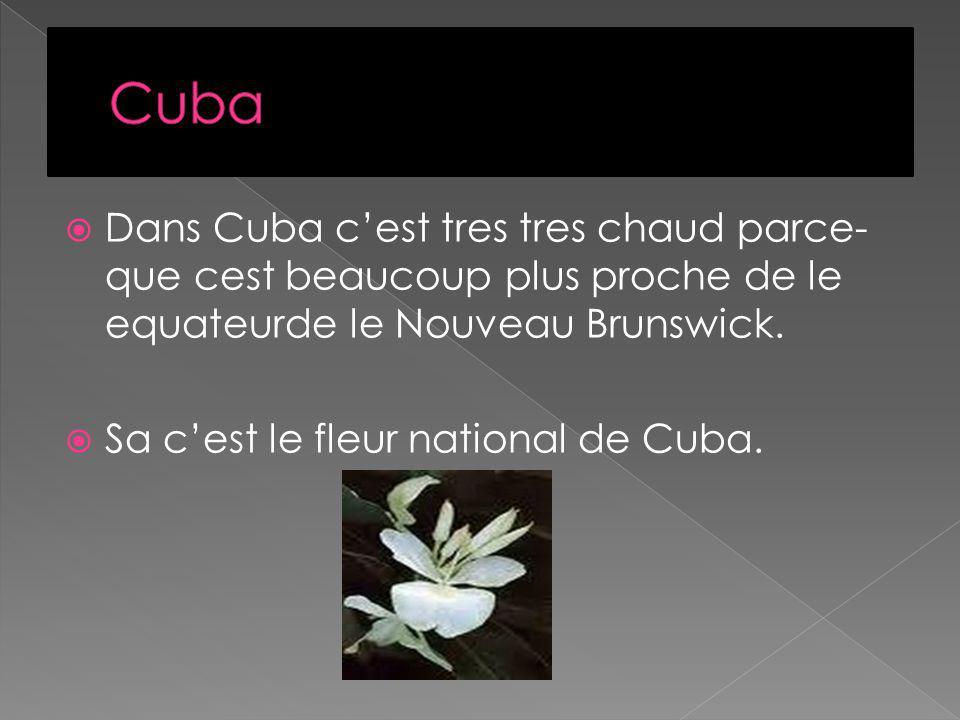 Dans Cuba cest tres tres chaud parce- que cest beaucoup plus proche de le equateurde le Nouveau Brunswick.