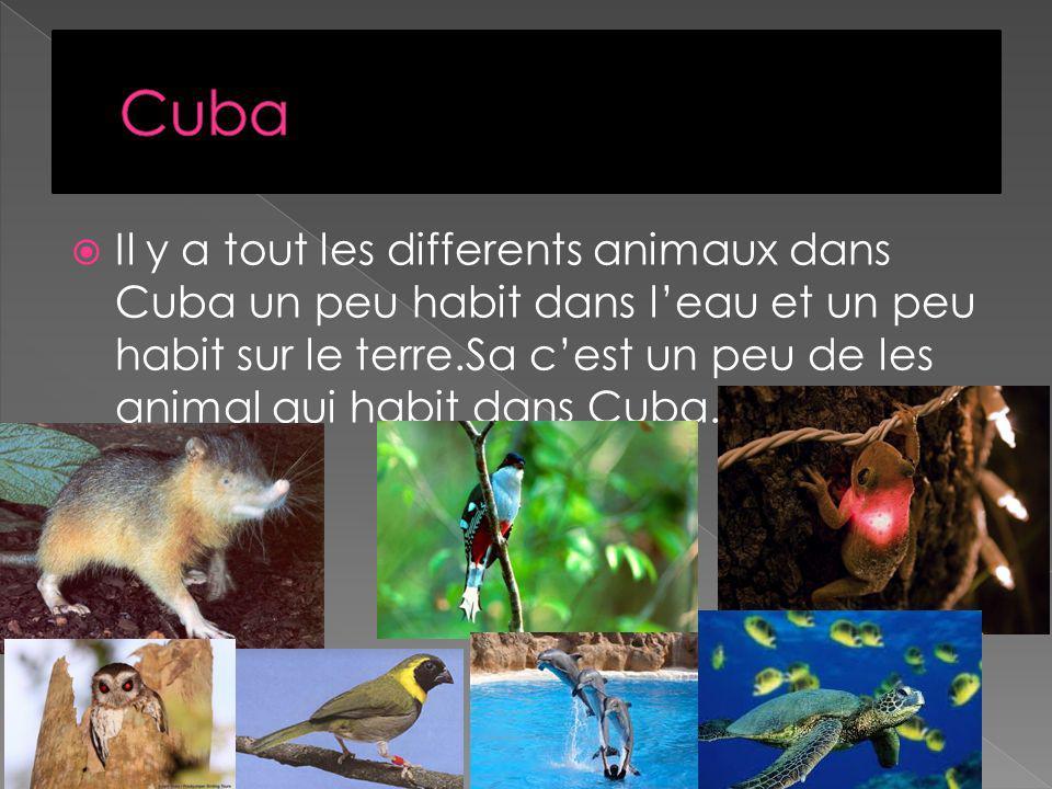 Il y a tout les differents animaux dans Cuba un peu habit dans leau et un peu habit sur le terre.Sa cest un peu de les animal qui habit dans Cuba.